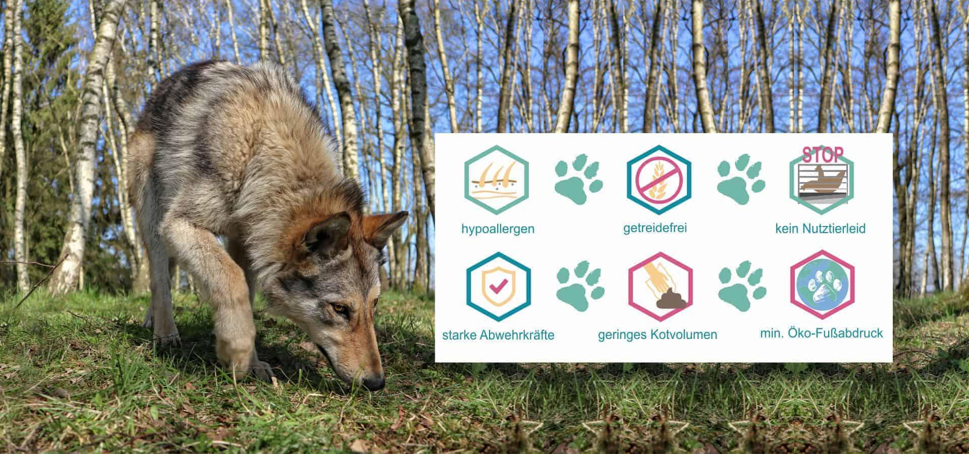 hundefutter insekten hypoallergen getreidefrei