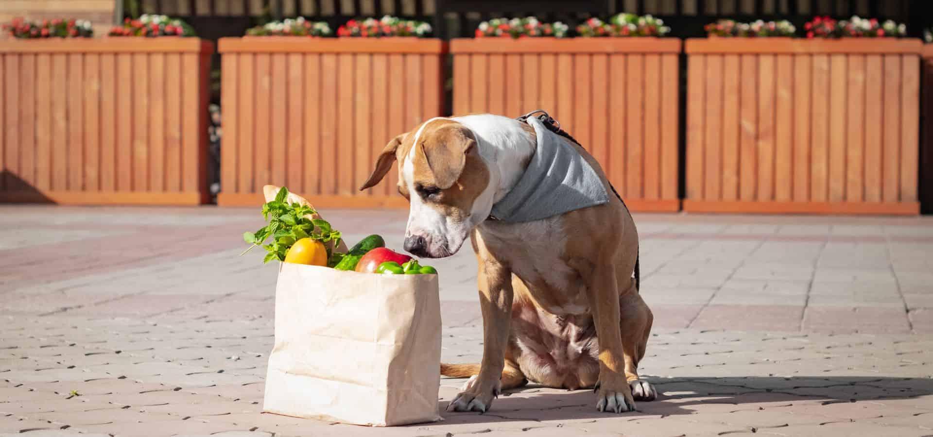 nahrungsergaenzungsmittel hund
