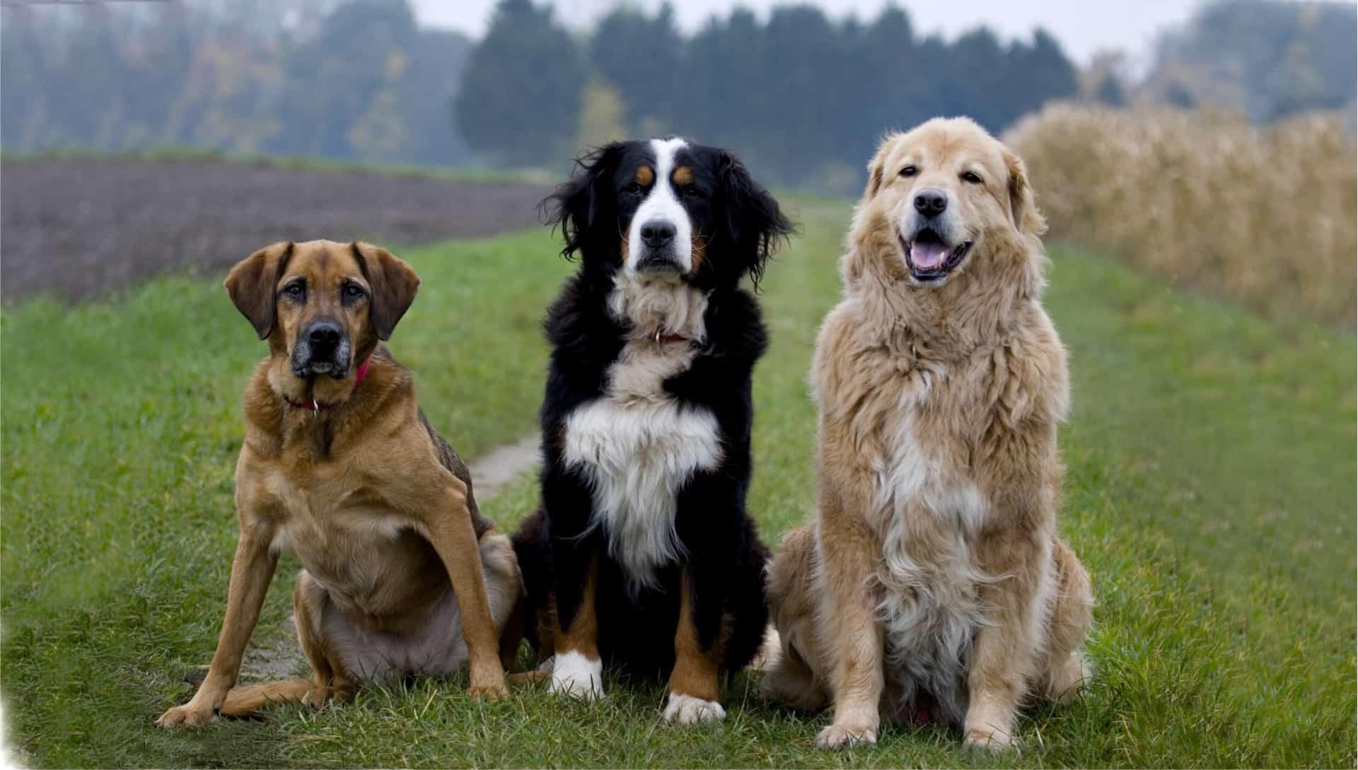 reinfleischdosen hund barfdose